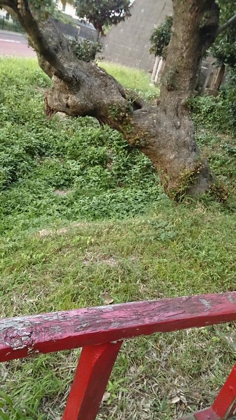 柏のダイダラボッチ伝説 左右の足跡/「イボ弁天」と厳島神社
