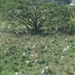 土浦にある巨大鷺コロニー