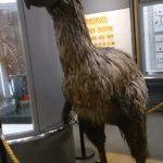 【我孫子】日本唯一の鳥類単科の博物館「我孫子市鳥の博物館」