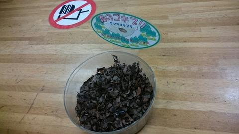【日野市】ゴキブリと触れ合える多摩動物公園 昆虫園